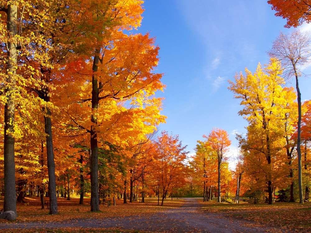 La photo de paysage aux couleurs de l'automne