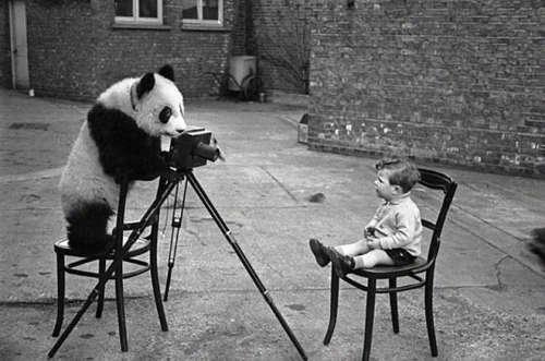 Séance photos d'animaux de compagnie !